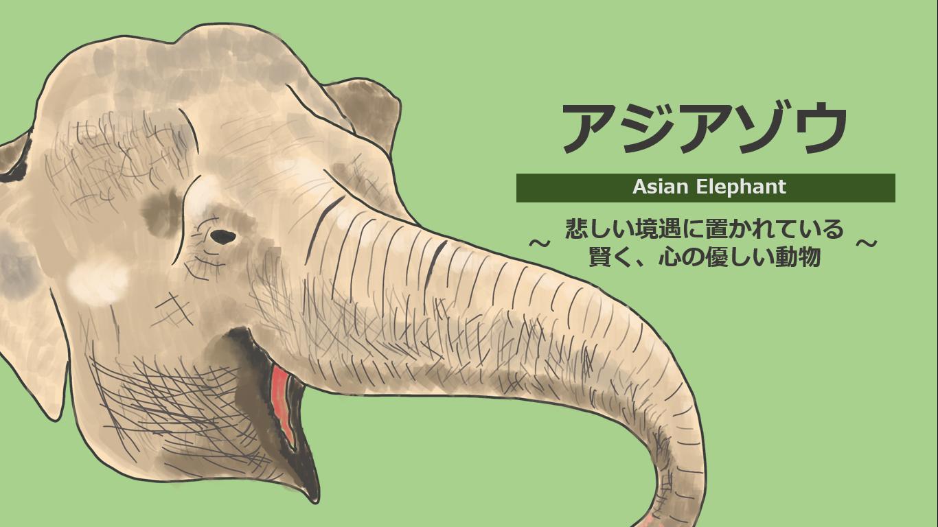 アジアゾウを獣医学生が解説!