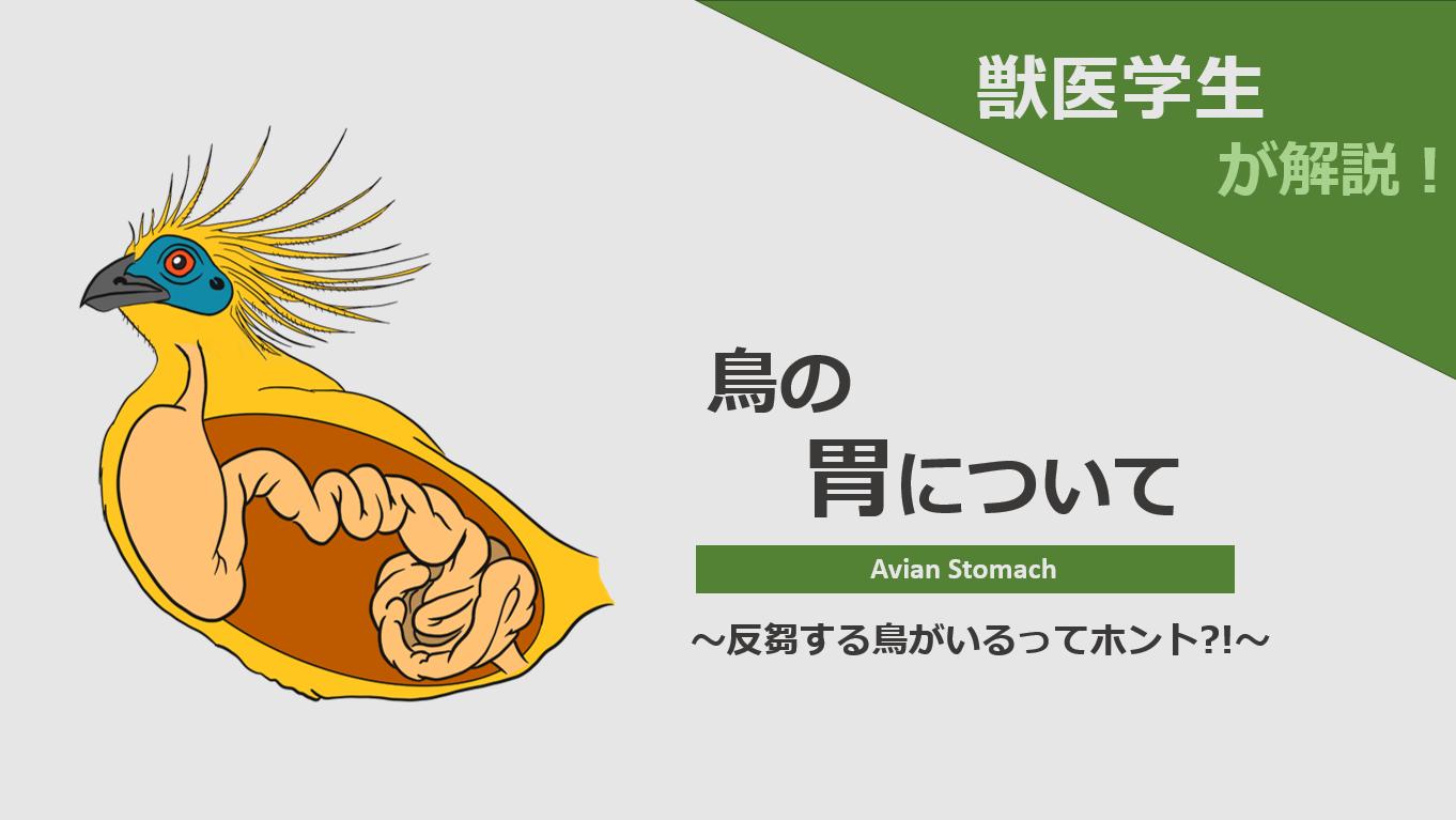 胃で食べ物を砕く?!反芻する種類も?!鳥の胃について獣医学生が解説