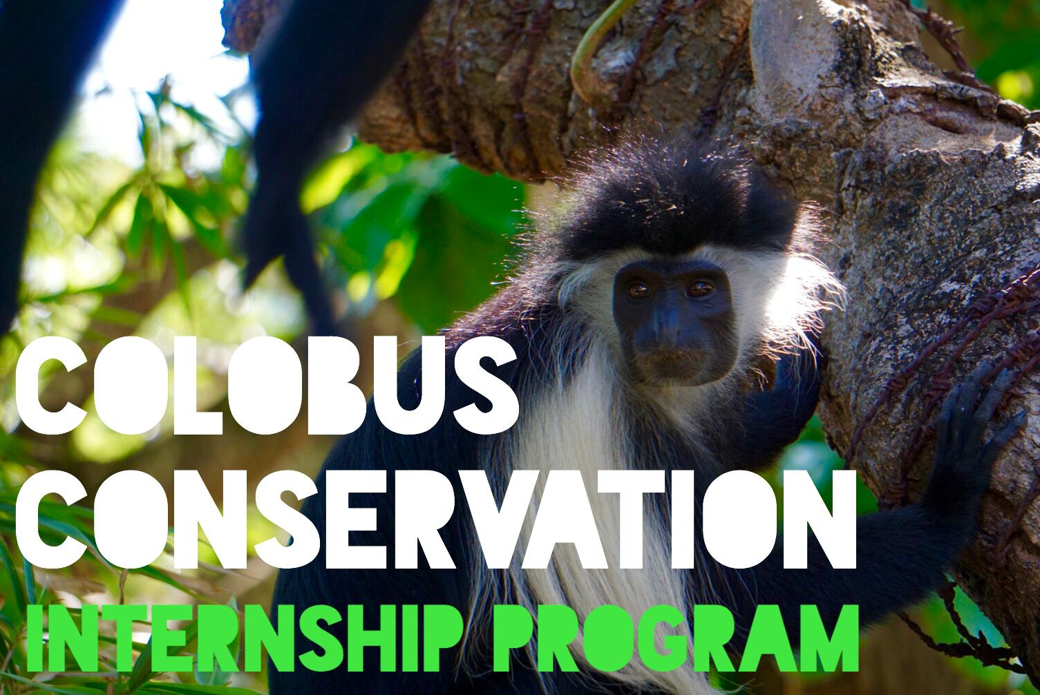 """ケニアの""""Colobus Conservation""""でインターン"""