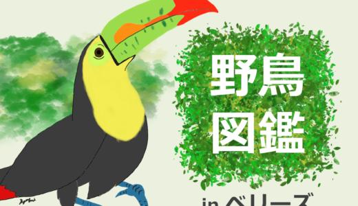 中米ベリーズの野鳥図鑑!